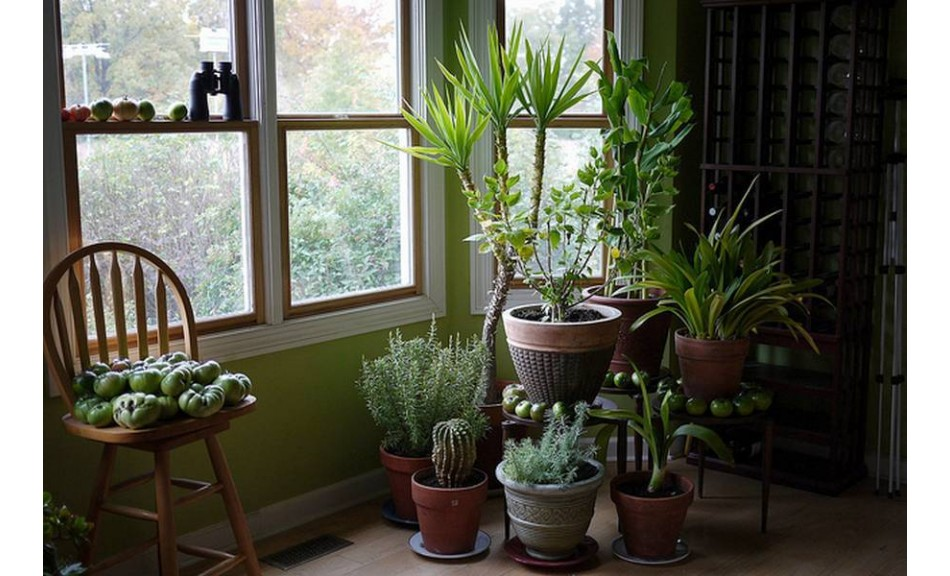 Ces plantes sont des bombes à oxygène – Ayez au moins l'une d'elles pour assainir l'air chez vous